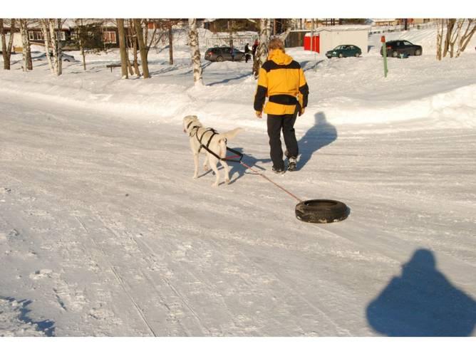 Bilde av Yukon Bakstykke for Pinnesele