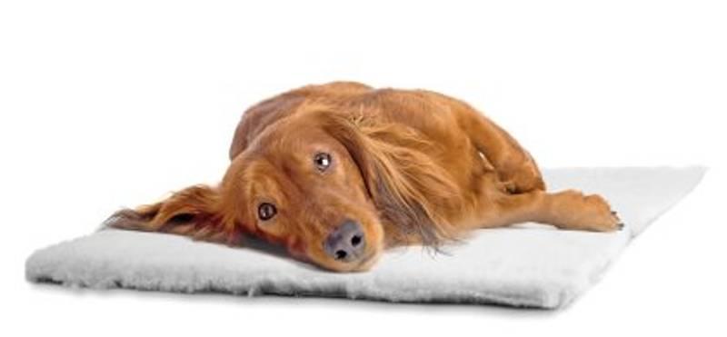 Bilde av Hundeteppe grå 75x100cm